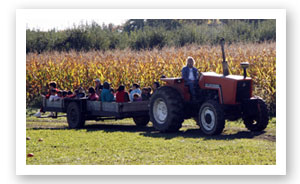 Tractor Rides at Stover's