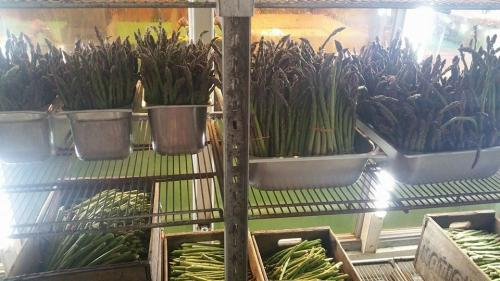 Fresh asparagus in the Big Red Barn