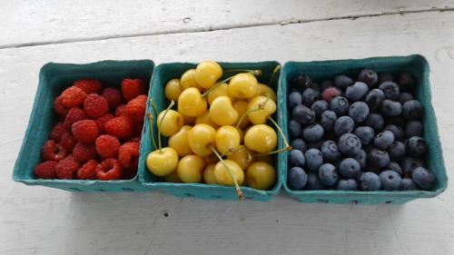 Fresh-picked berries from Stover's U-PIC