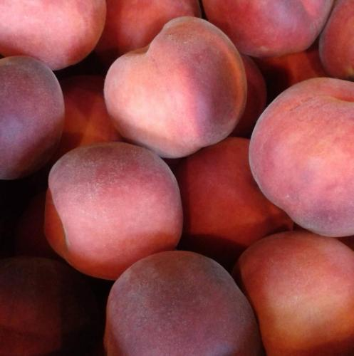 Fresh picked peaches from Stover's U-PIC